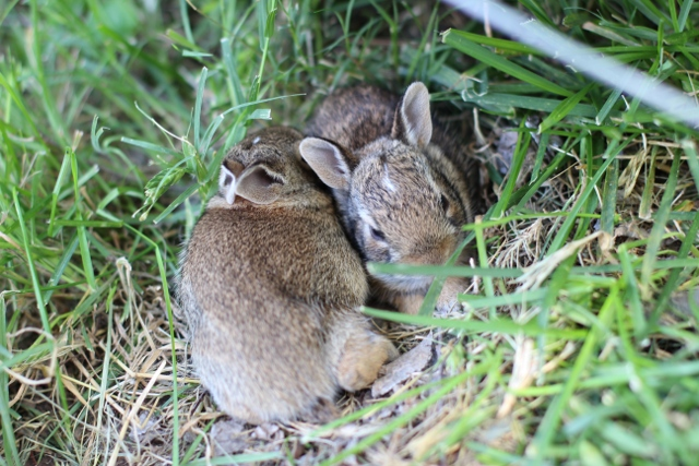 Walking with Cake: Baby rabbits