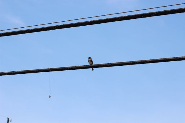 Walking with Cake: Bird on a wire