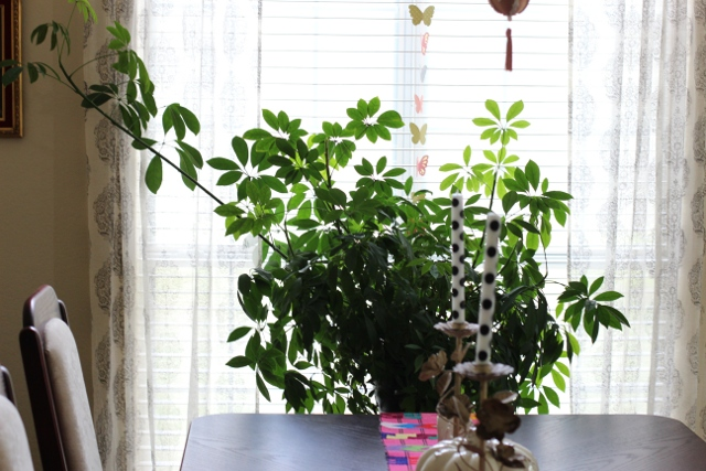 Walking with Cake: Dining room plant