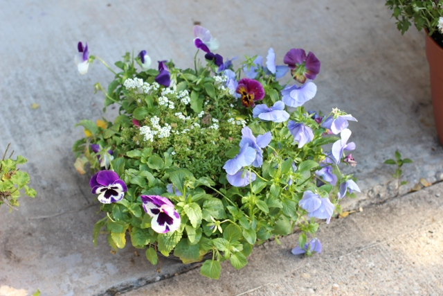 Walking with Cake: Pretty pansies