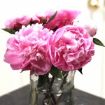 (Peonies, again, because they are pretty.)