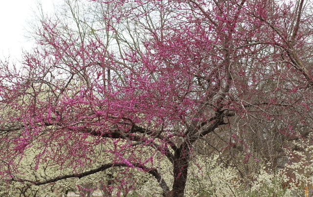 Walking with Cake: Blooming Tree