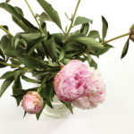 (I know they are so overdone, but we only get peonies in our local stores for a short time each spring.)