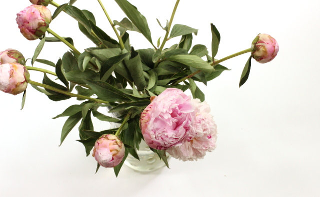 Walking with Cake: Peonies