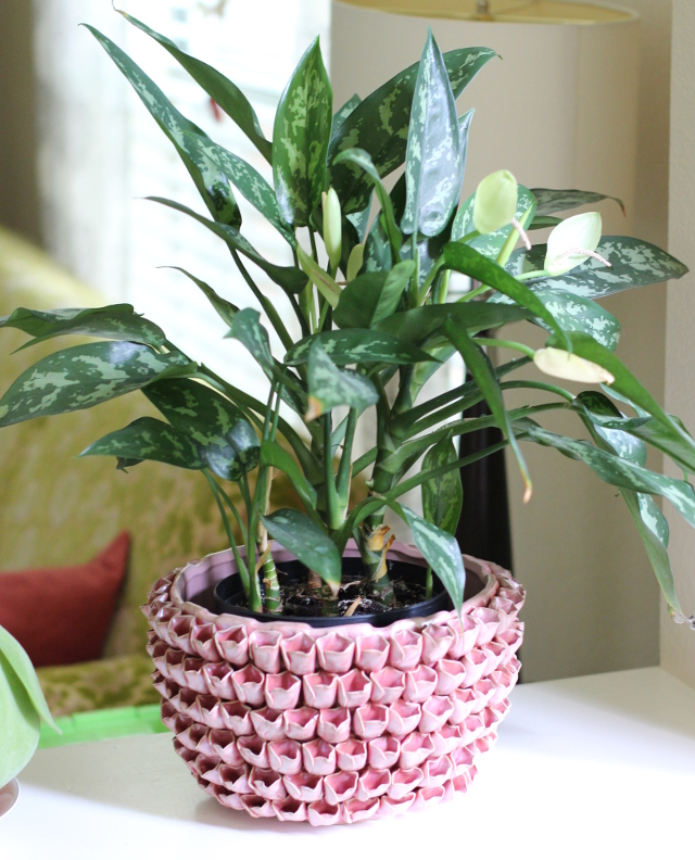 Walking with Cake: Cast Iron Plant