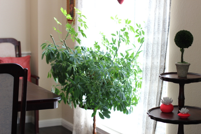 Walking with Cake: Giant Plant