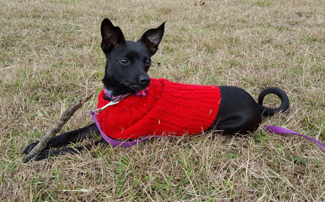 Walking with Cake: Marnie in red sweater