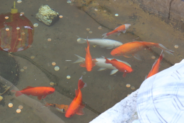 Walking with Cake: Chinatown Koi Pond