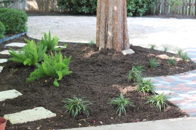 Walking with Cake: Backyard landscaping